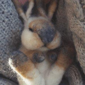kurs króliczek
