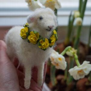 kurs owieczka
